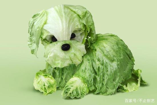 我不知道发生了什么事,内心有点凌乱,只有一点可以确定,这蔬菜我不忍心吃。
