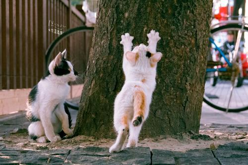 """一只小猫正磨爪""""练功,同伴看着。受访者供图"""