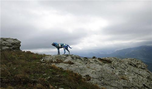 艺术家用海洋垃圾制作动物雕塑