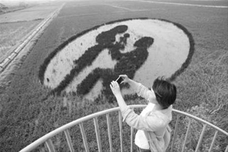 沈阳首次引入3D稻田画亮相   观赏面积达680亩