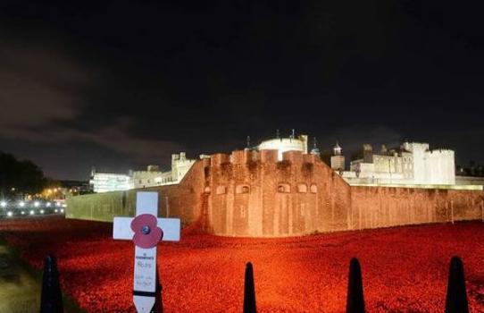 伦敦塔红色陶瓷罂粟花收益归属引愤怒