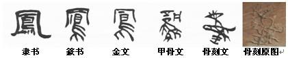 """刘凤君教授""""破译""""出的骨刻文字:凤"""