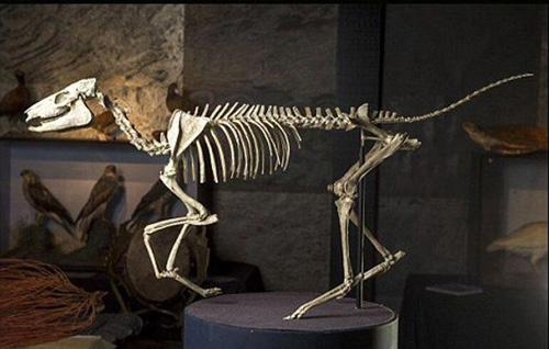 被出售的恐龙化石,古代工艺品和艺术品