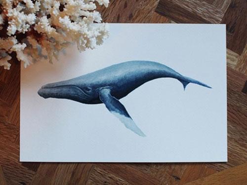 梦幻鲸鱼彩铅画步骤
