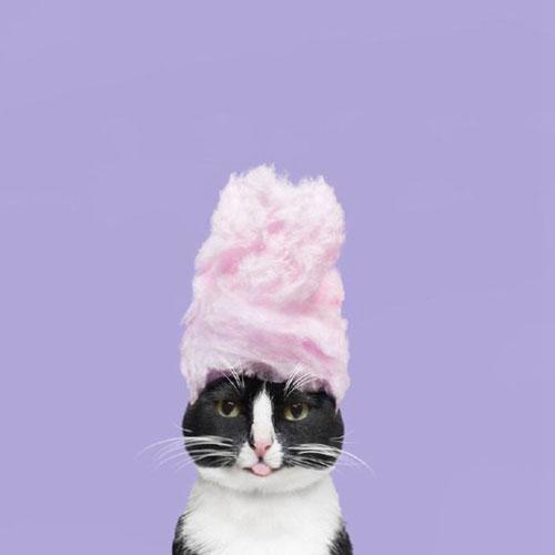 黑白宠物猫的无厘头摄影图