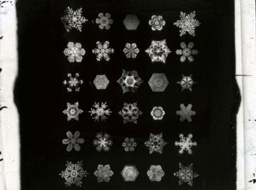 威尔逊・本特利发现每一片雪花都如此不同