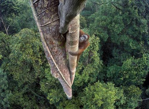英2016年度最佳野生动物摄影作品深触人心