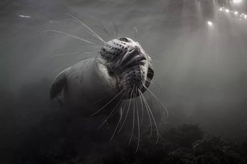 探索海洋奇观 感受海底世界的魅力