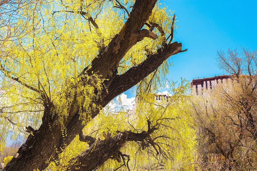 春色才是这片土地上最感人的色彩呀