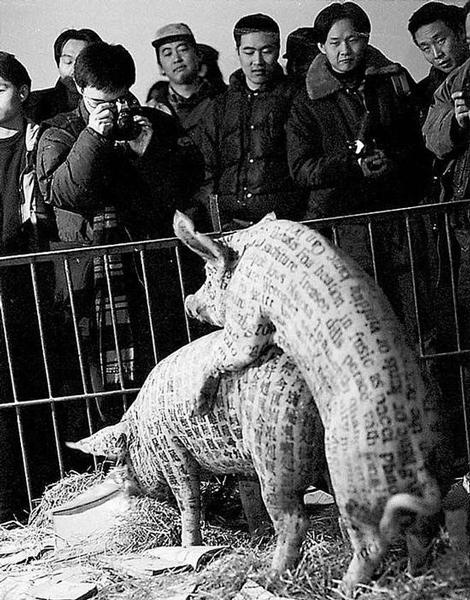 激进当代艺术vs动物保护