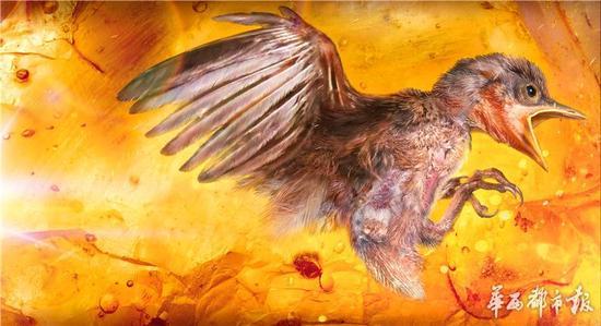 琥珀包裹迄今最完整古鸟 距今9900万年