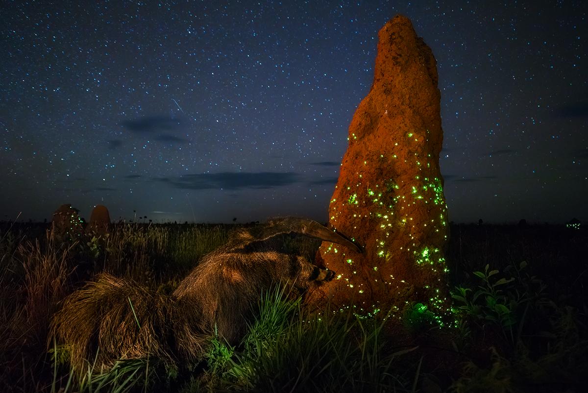陆生野生动物组冠军《生态系统》 摄影师:Marcio Cabral(比利时)