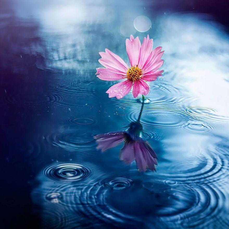 绚丽虚化和迷醉炫光 打造清新精致的花朵大片