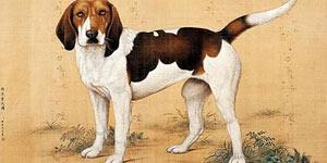 中西远古神话中,狗狗为何从未缺席?