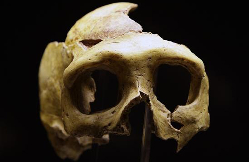科学家表示尼安德特人灭绝或是因为不会画画