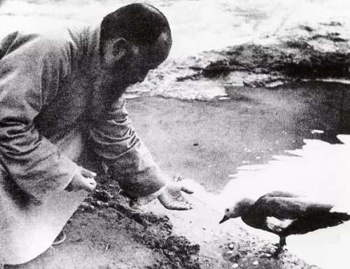 张大千在敦煌养鸭以改善生活