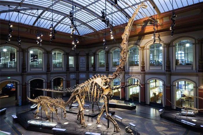 现存于柏林自然博物馆中的腕龙化石图片:Wikipedia